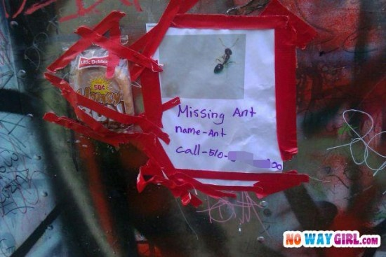 Missing Ant