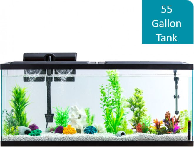 Details About 55 Gallon Aquarium Fish Tank Full Starter Kit Led Lights Filter Hood Pet Home 55 Gallon Aquarium Aquarium Fish Tank Aquarium Fish