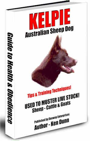 The Kelpie - Australian Sheep Dog (Tips/Training & Techniques)