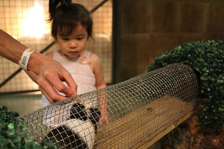 Zoolung Zoolung Indoor petting zoo fun for all ages.