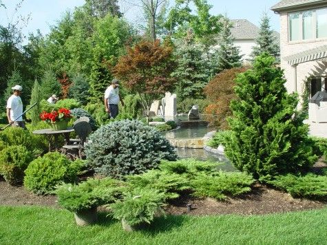 769 best images about conifers on pinterest cedrus for Great landscaping ideas