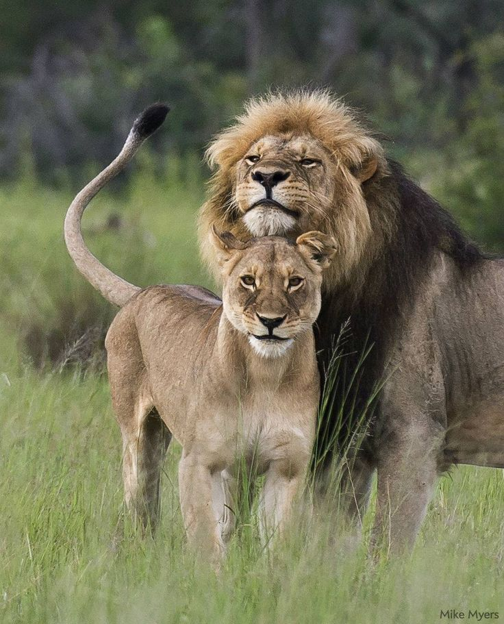 A King protect his Queen...every time