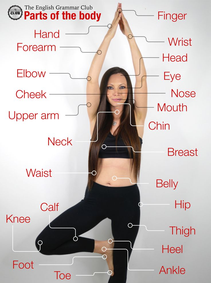 On this page you will find an infographic that shows you the parts of the body in English.