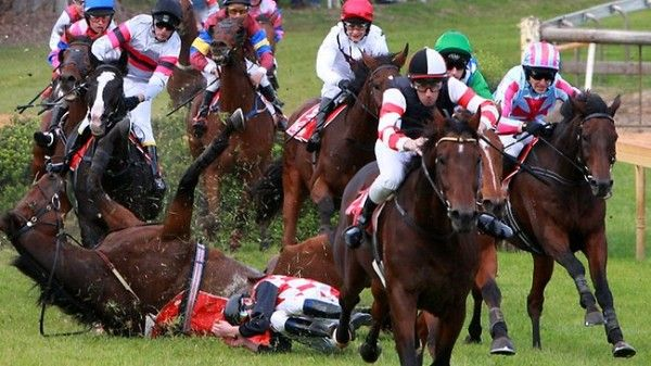 Quick links to share the petition: Ban jumps racing in Victoria and South Australia! | Yousign.org