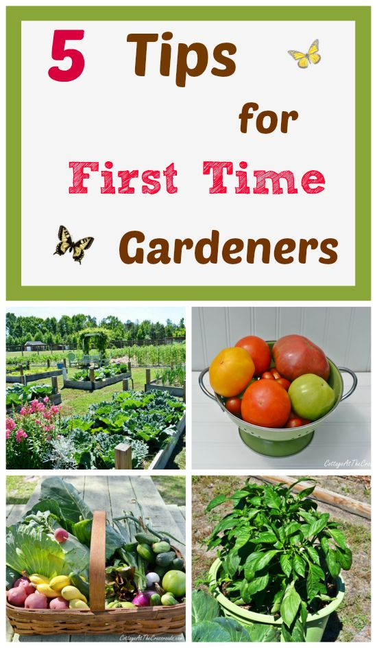 Are you thinking about starting a vegetable garden this year? Here are our 5 tips for beginning gardeners based on what we've learned over the years. #gardeningtips from Cottage at the Crossroads