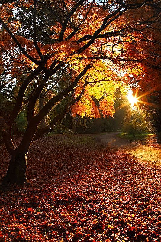 Image result for autumn leaves at sunrise