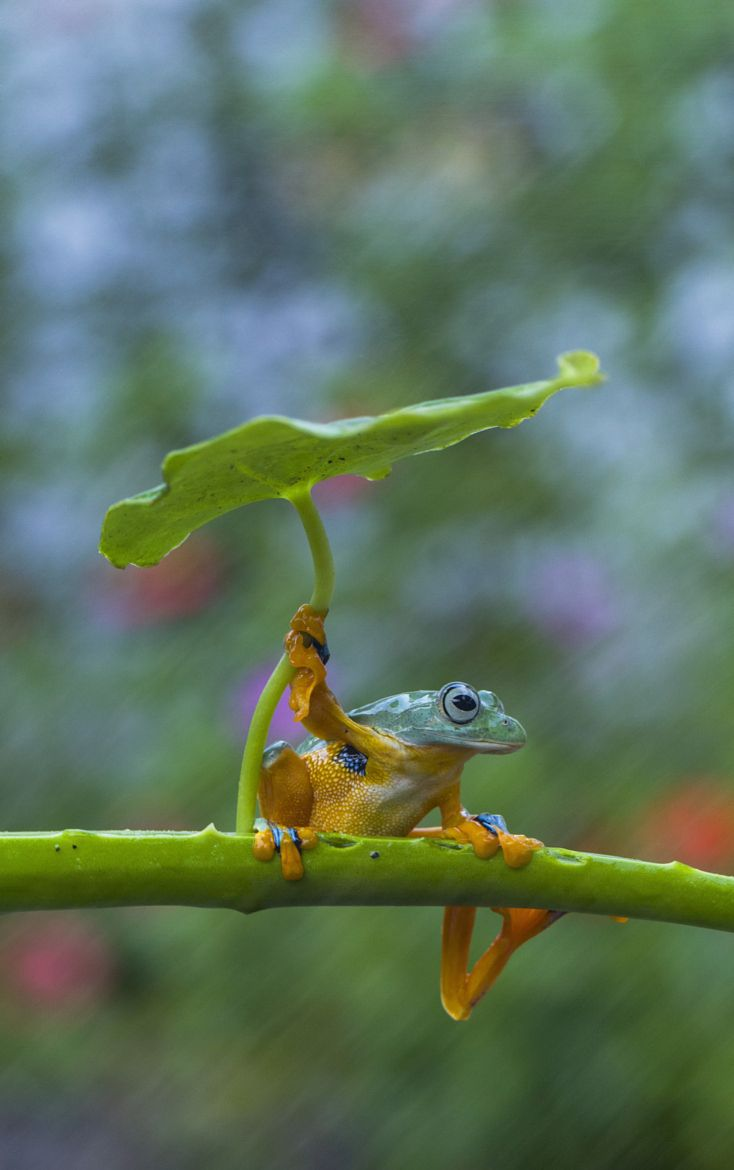 best 25 funny frogs ideas on pinterest frogs animated frog and