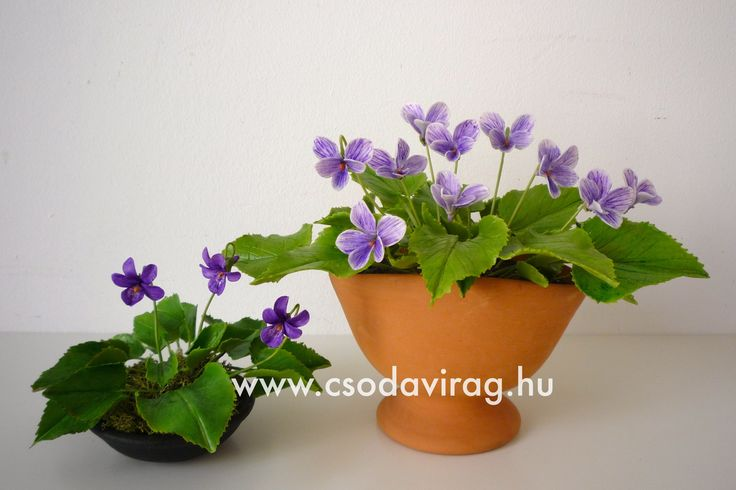 Viola odorata (Illatos ibolya) - My clay flower https://www.facebook.com/Csodavirag