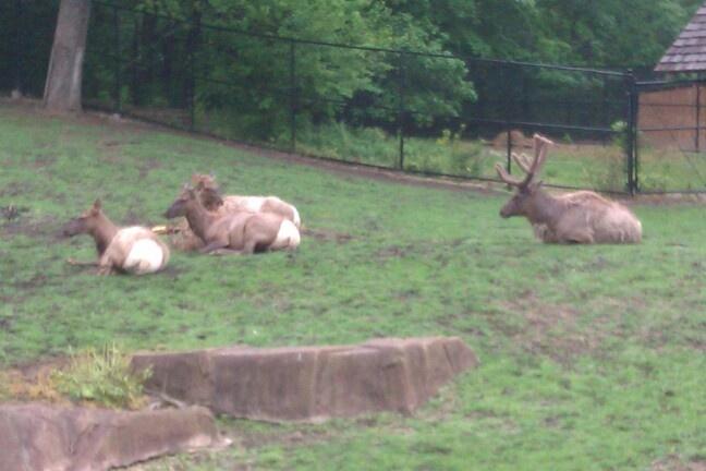 memorial day zoo