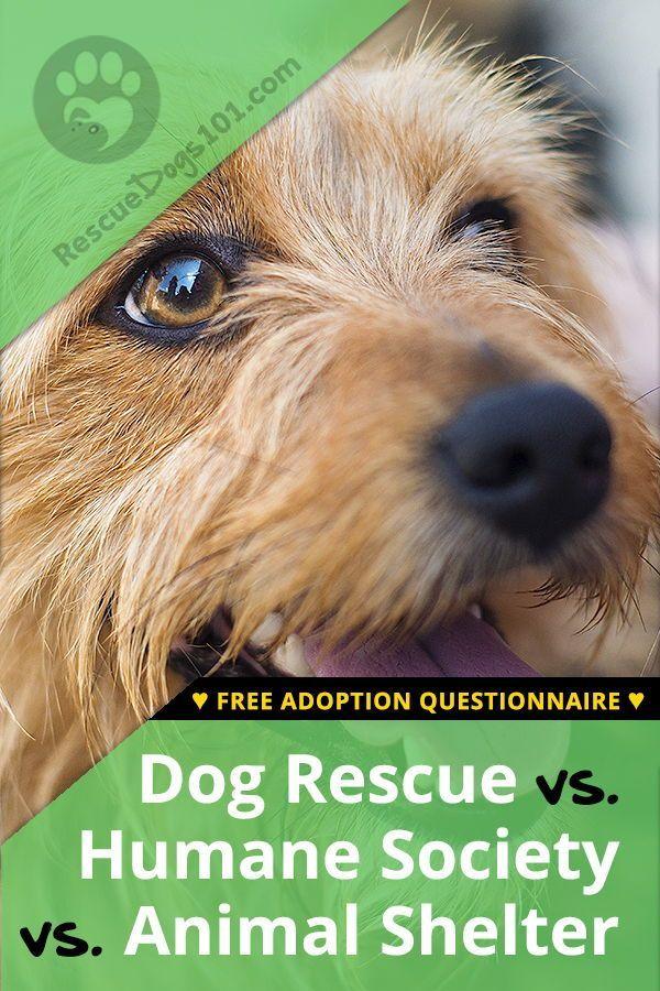 Humane Society Vs Animal Shelter Vs A Dog Rescue Rescue Dogs