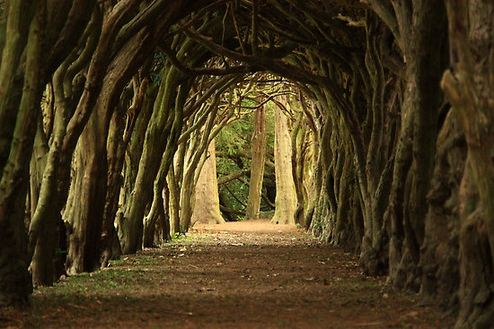 Cloister at Gormanston College, Co Meath Ireland - A walk with beauty surrounded by peace.