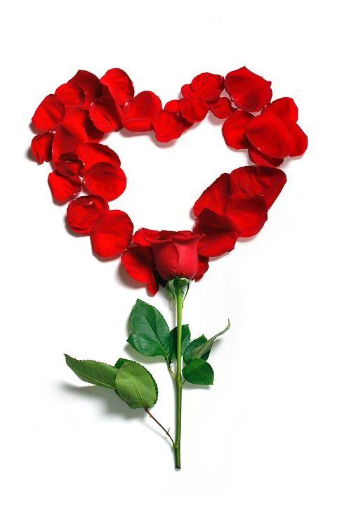 Rose, Płatki, Kwiatowy, Kwiaty, Kwiat, Piękne, Róże