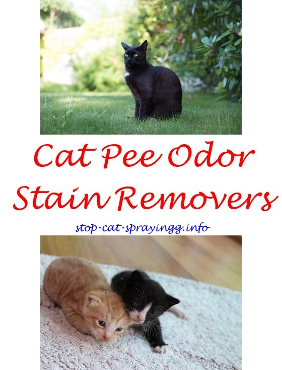 Cats Down Under The Stars Spray Paint Stencils.Prevent Cat Scratching  Furniture Spray.How To Get Rid Of Cat Spray Smell Inside   How To Stop Cat  Spraying?