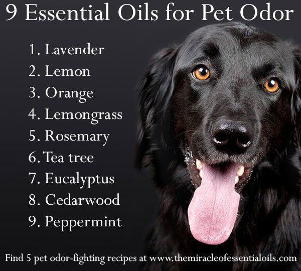 essential oils for pet odor - this one has multiple recipes for different types of odor removal and different blends of essential oils