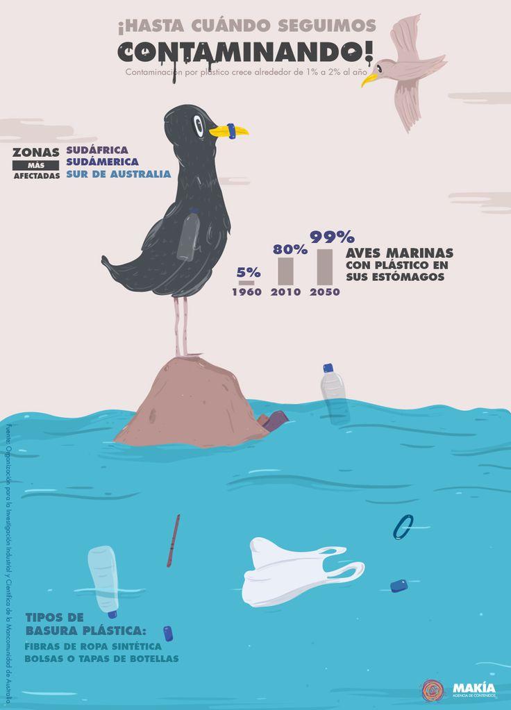 OMG! El 99% de las aves marinas tendrá plástico en su estómago en el 2050  #MedioAmbiente #environment