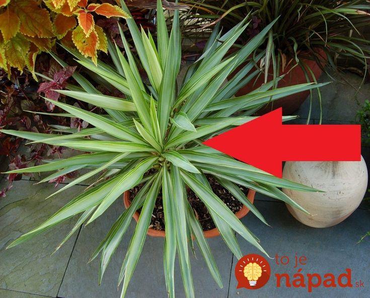 Dajte si do spálne túto rastlinu a konečne sa poriadne vyspíte!