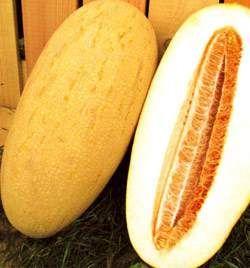 Семена дыни – лекарство от кашля и афродизиак