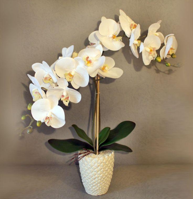 9 правил, благодаря которым орхидея будет буйно цвести круглый год