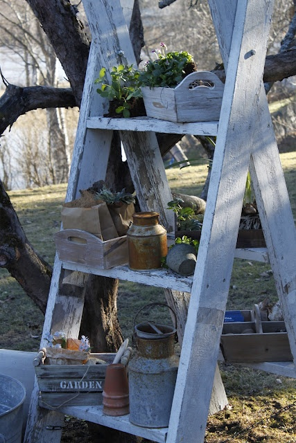 garden crates and plants