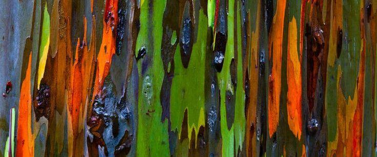 http://bookbindersdesign.ch/wp-content/uploads/2015/01/Regenbogen_Eukalyptus.jpg