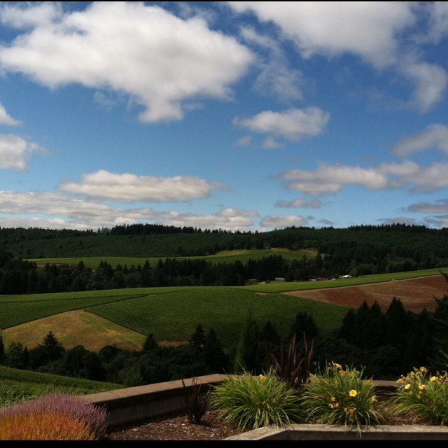 Willamette Valley pinot country