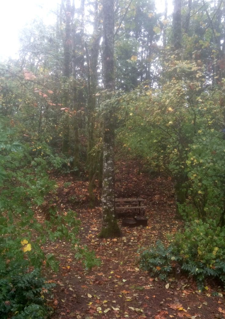 Private Wooded Tent Sites Timberlake Campground Stevenson Washington