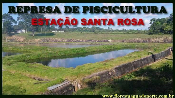 Amazônia - Santarém - Estação de Piscicultura Santa Rosa - Tanques -  Ce...