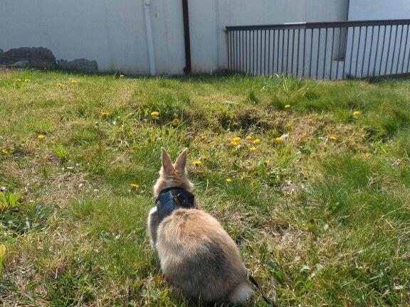 Tony and grass