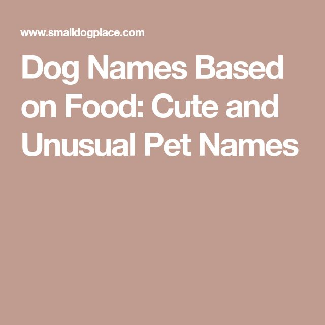 Dog Names Based on Food: Cute and Unusual Pet Names