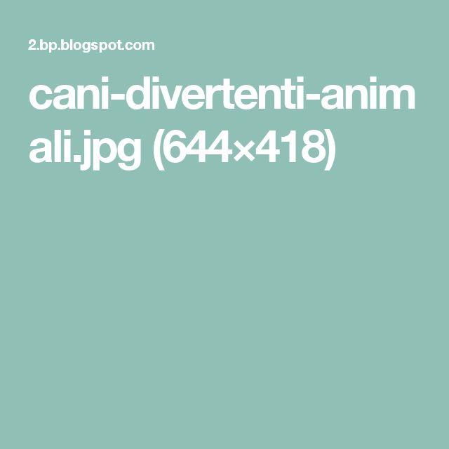cani-divertenti-animali.jpg (644×418)