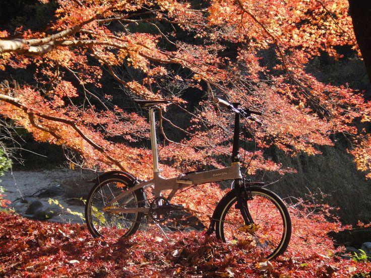 Copyright © 恵壱 様 / dahon veloce 2008 / 自転車趣味の入り口を開いてくれたのがDAHONのフォールディングバイク。最初に購入したのはBoardwalkでしたが、そこからミニベロの世界にものめり込み、このveloceで既に3台目DAHON。今回は街乗りポタリング用にと思いシンプルにシングルスピードカスタムしました。近所の紅葉スポットへ出かけたのがカスタム後の初乗り。変速が無くても軽量に仕上がったのでちょっとした上りも行けます。軽い気持ちで輪行も出来るのがフォールディングバイクの魅力ですね。暖かくなったらどこか遠くの地も走ってみたいと思います。