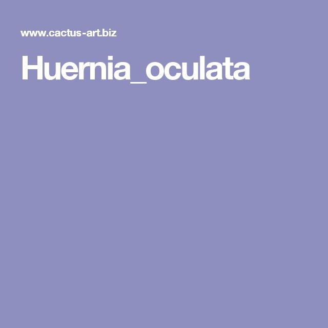 Huernia_oculata