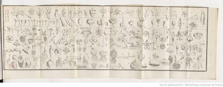 Nouveau manuel de botanique élémentaire et de botanique appliquée à l'agriculture, à la médecine des hommes et des animaux, aux actes industriels et à l'économie domestique.... Tome 2 / par M. Villette... | 1838