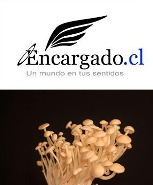 Enoki – Píng gu – Eryngii – Shitake Tierra Húmeda La lluvia da paso a una suave llovizna, y luego a las setas ... http://encargado.cl/?p=3592