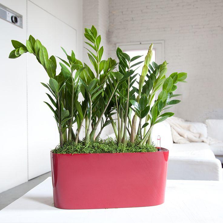 35 best Indoor Plants Melbourne images on Pinterest | Melbourne ...