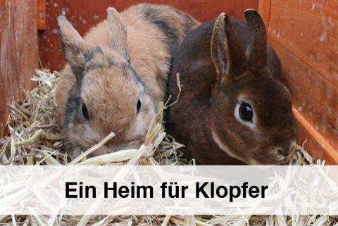 kaninchenstall bauen das ideale gehege f r drinnen kaninchen heim leben. Black Bedroom Furniture Sets. Home Design Ideas