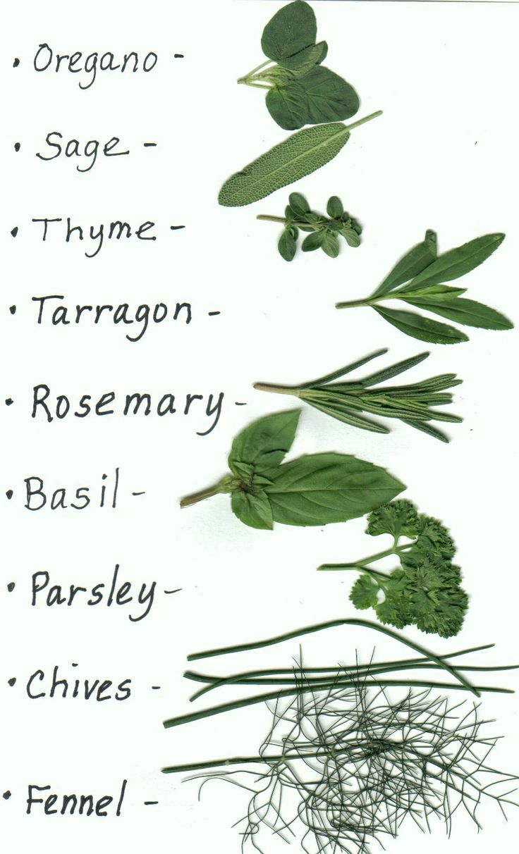 Types of herbs for garden2 all natural home garden pinterest herbs and planting - Indoor plant types ...