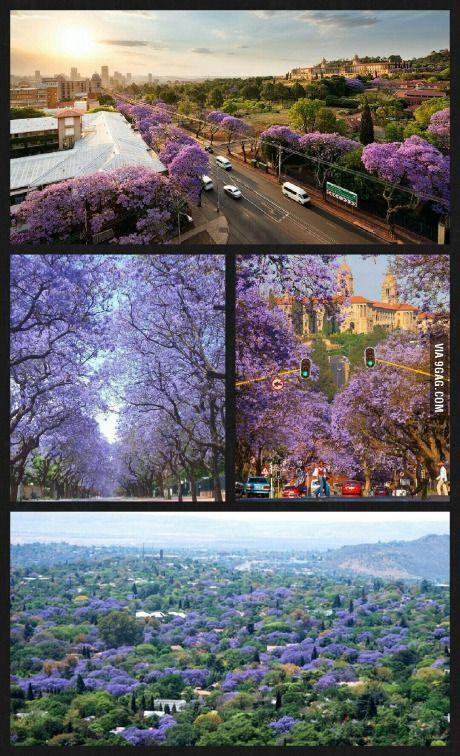 My hometown, Pretoria, in October (South Africa)