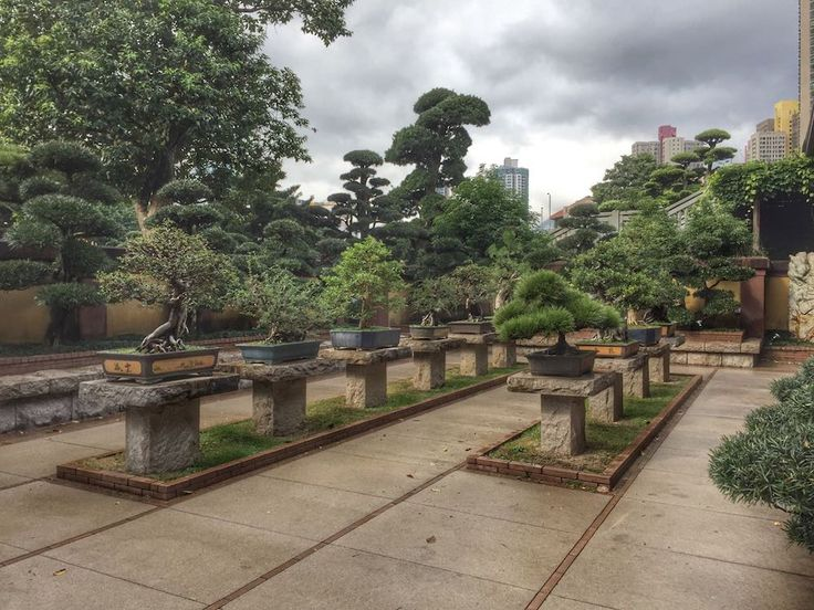 Garden Ninja recently visited one of the finest examples of Chinese gardens, the Nan Lian garden in Hong Kong. Set in the busy and sprawling Kowloon district it is a welcome relief from the excitement and exhaustion of the city. The gardens spread over 3.4 hectares and opened in 2006, though walking around them you …