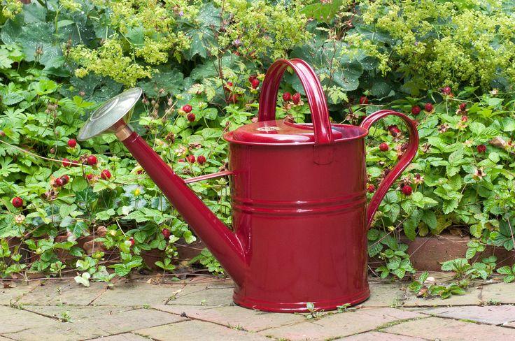 Ein Klassiker aus England, nostalgisch in weinrot. Eine kleinere Variante der beliebten Traditional Watering Can von Haws.