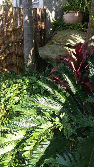 Cycas revoluta philodendron xanadu and cordyline rubra provide lush look  to garden