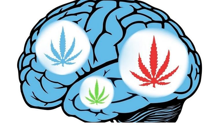 Harvard - New research published in the journal Schizophrenia Research has discovered evidence that marijuana smoking, despite how often or in what amount, will not lead to an increase in schizophrenia, despite decades of false claims to the contrary.
