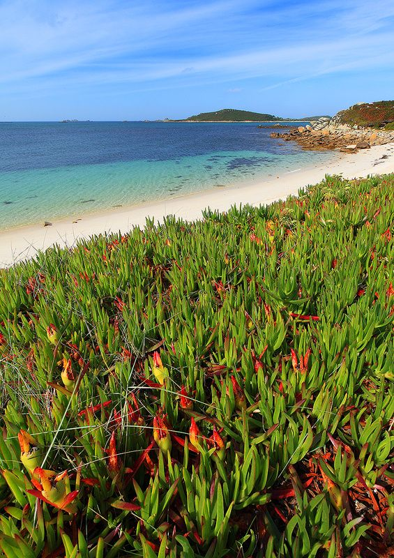 Isle of Tresco, Isles of Scilly, Cornwall, England