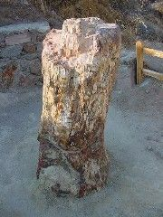 Petrified Forest of Lesvos