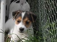 Kleine Kalu als pup van 5 weken, zoooo lief