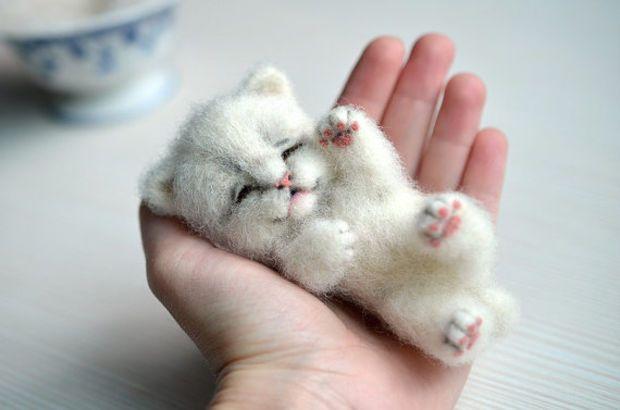 how to raise a sweet kitten