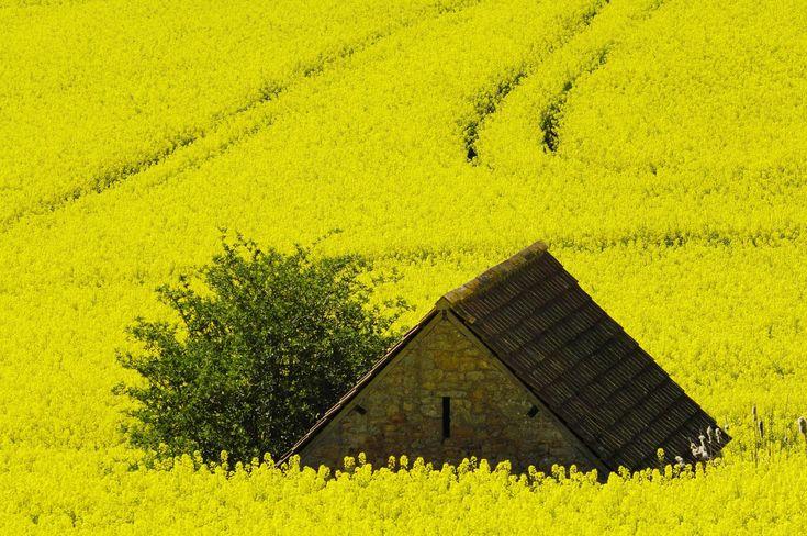Cum arată primăvara în diferite colțuri ale lumii