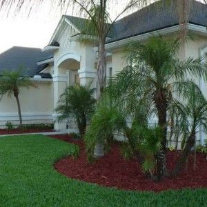 Small Front Yard Tree Ornamental | Tree Landscaping Ideas With Palm Trees With Neat Grass Yard , Applying ...