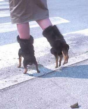 are those dogs she is walking on?