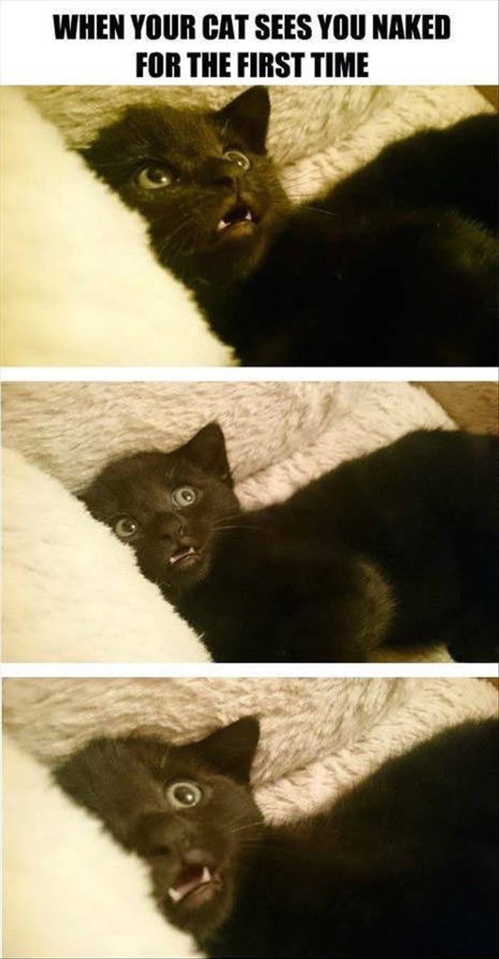Best 25 Pics of kittens ideas on Pinterest